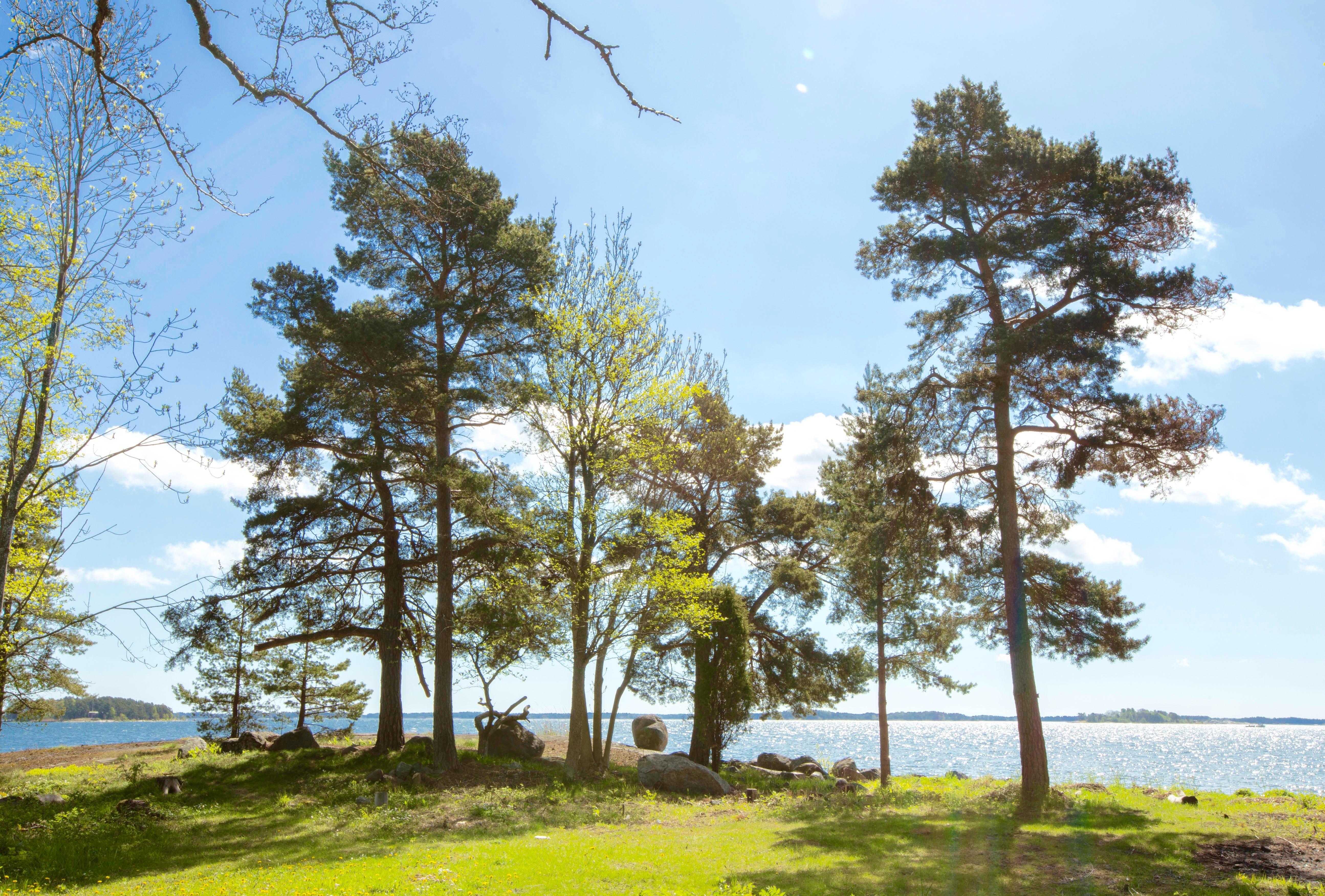sommarbild från Stockholms skärgård